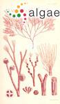 Herposiphonia calothrix (Harvey) Womersley