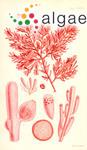 Chondria clavata (Sonder) Harvey