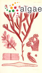 Polyphacum proliferum (J.V.Lamouroux) C.Agardh