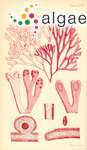 Rhodymenia australis Sonder