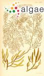 Sirophysalis muricata (C.Agardh) Kützing