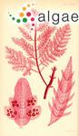 Delesseria dendroides Harvey