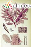 Lenormandia marginata J.D.Hooker & Harvey