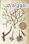Polysiphonia hystrix J.D.Hooker & Harvey