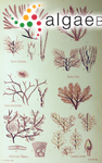Haliptilon subulatum (J.Ellis & Solander) H.W.Johansen