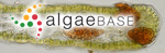 Punctaria latifolia Greville