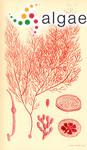 Chrysymenia coccinea Harvey