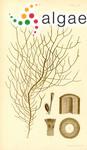 Cladosiphon chordaria Harvey