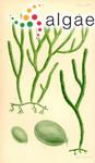 Fucus simpliciuscula R.Brown ex Turner