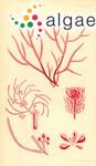 Wrangelia halurus Harvey