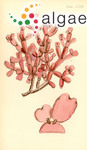 Amphiroa australis Sonder