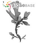 Membranifolia coccocarpa (Montagne) O.Kuntze