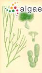 Penicillus arbuscula Montagne