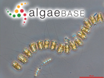 Thalassiosira angustelineata (A.W.F.Schmidt) G.Fryxell & Hasle