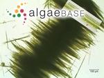 Aphanizomenon flosaquae Ralfs ex Bornet & Flahault