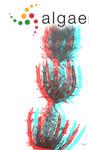 Chara baltica (C.J.Hartmann) Bruzelius