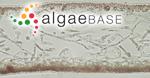 Kallymenia reniformis (Turner) J.Agardh