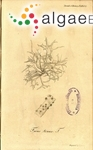 Gloiopeltis tenax (Turner) Decaisne