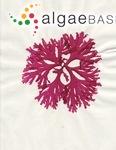 Metacallophyllis laciniata (Hudson) A.Vergés & L.Le Gall