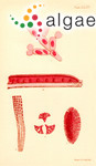 Rhodopeltis australis (Harvey) Harvey