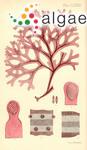 Carpopeltis phyllophora (J.D.Hooker & Harvey) F.Schmitz