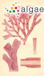 Rhodymenia obtusata (Sonder) Sonder