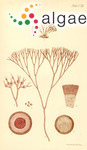Gymnogongrus fastigiatus Harvey