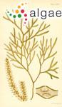Myriodesma serrulatum (J.V.Lamouroux) Endlicher