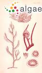 Polysiphonia rostrata Sonder
