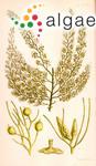 Sargassum sonderi (J.Agardh) J.Agardh