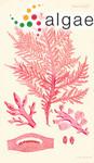 Fucus lucidus R.Brown ex Turner