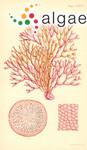 Dichotomaria obtusata (J.Ellis & Solander) Lamarck