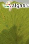 Anadyomene stellata (Wulfen) C.Agardh