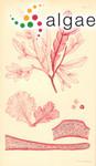 Delesseria coriifolia Harvey