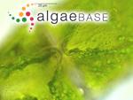 Euastrum crassum Ralfs
