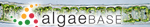 Ulvaria obscura (Kützing) Gayral ex Bliding