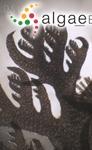 Plocamium violaceum Farlow