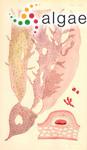 Rhodymenia polymorpha Harvey