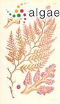 Laurencia botryoides (C.Agardh) Gaillon