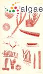 Polysiphonia blandii Harvey
