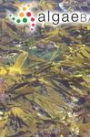 Hafgygia pallida (Greville) Areschchoug