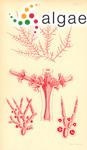 Wrangelia nitella Harvey