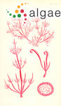Austroclonium charoides (Harvey) Min-Thein & Womersley