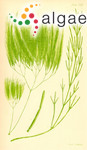 Cladophora bainesii F.Müller & Harvey ex Harvey