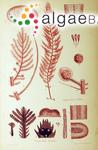 Asparagopsis delilei Montagne