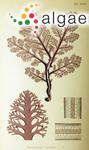 Mammea dorsifera (C.Agardh) J.Agardh