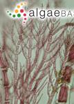Antithamnionella spirographidis (Schiffner) E.M.Wollaston