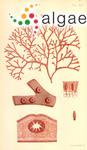 Acrotylus australis J.Agardh