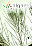 Aglaothamnion sarcodiae Børgesen