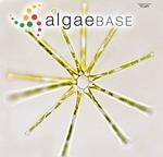 Asterionella formosa Hassall